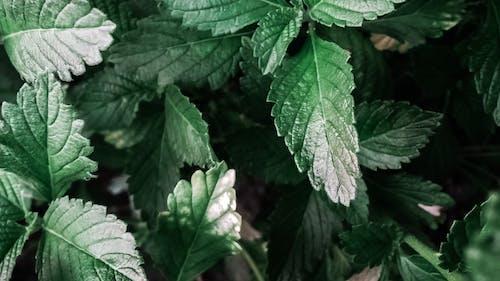 คลังภาพถ่ายฟรี ของ ธรรมชาติ, พืช, สีเขียว