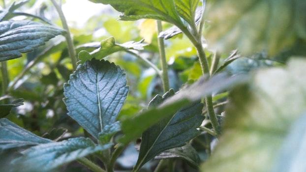 Free stock photo of blur, leaves, plants, fresh