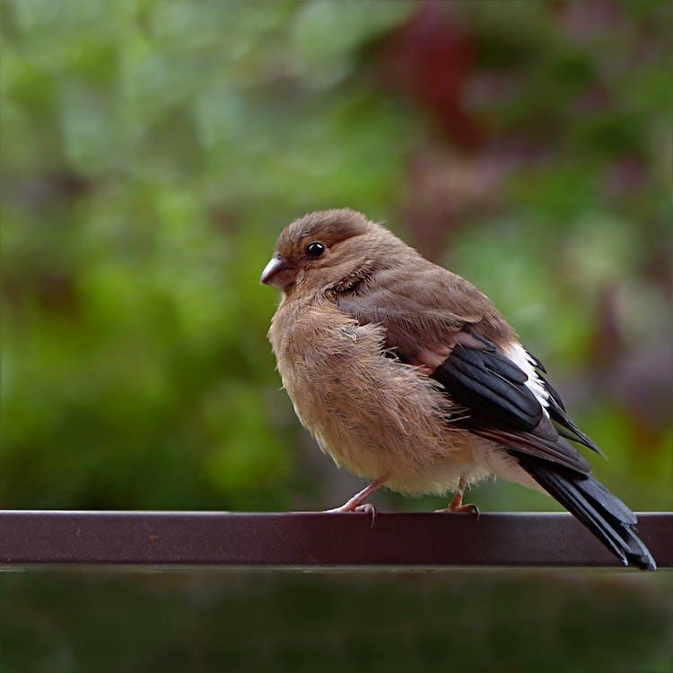 Fotos de stock gratuitas de al aire libre, animal, aviar