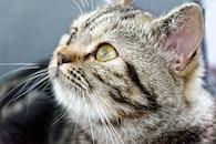 pet, cat, look