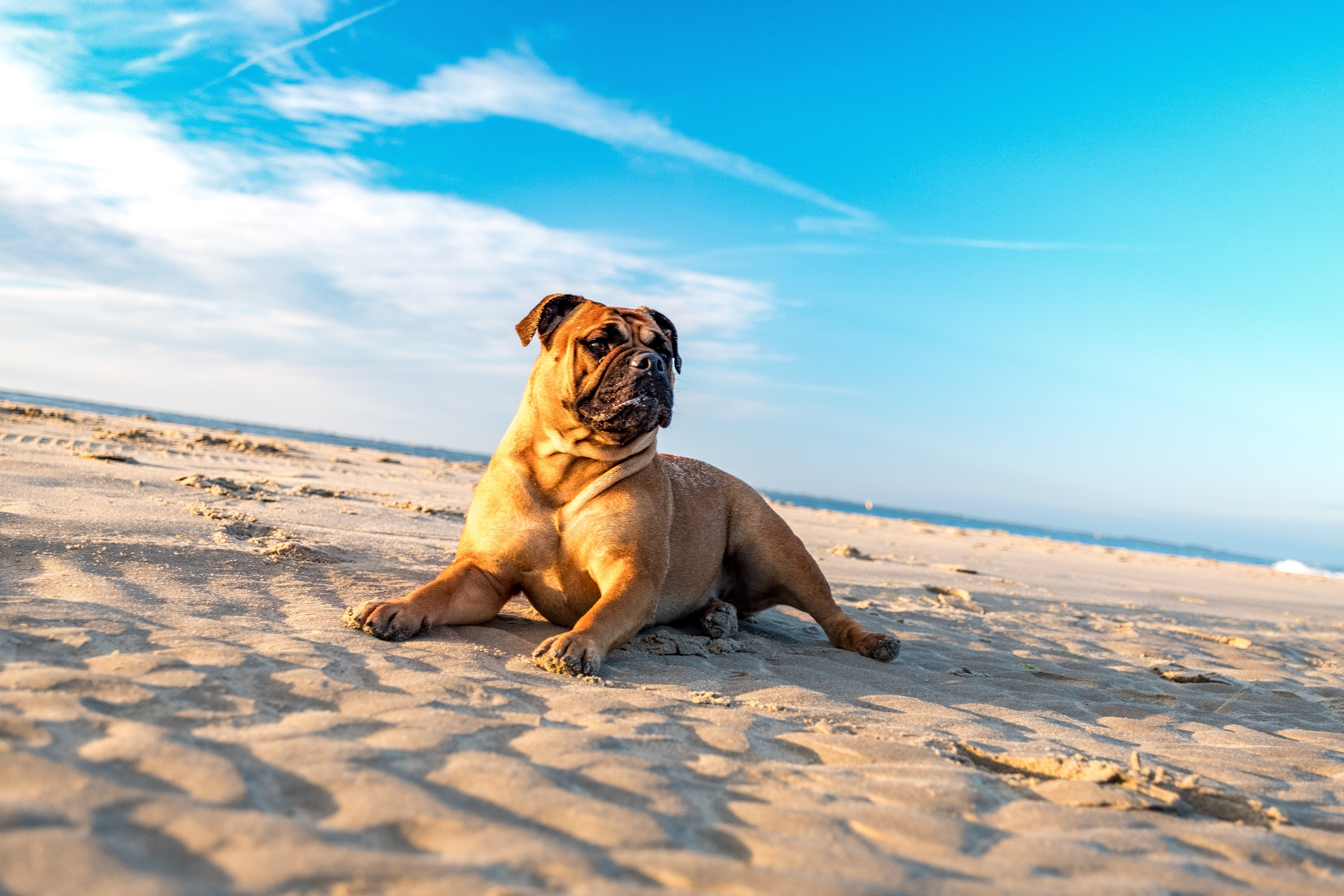 Brown Dog Lying on Sand Field