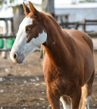 Free stock photo of animal, horse, colt, mare