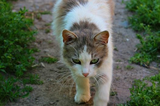 Free stock photo of animal, cat, wool, tenderness