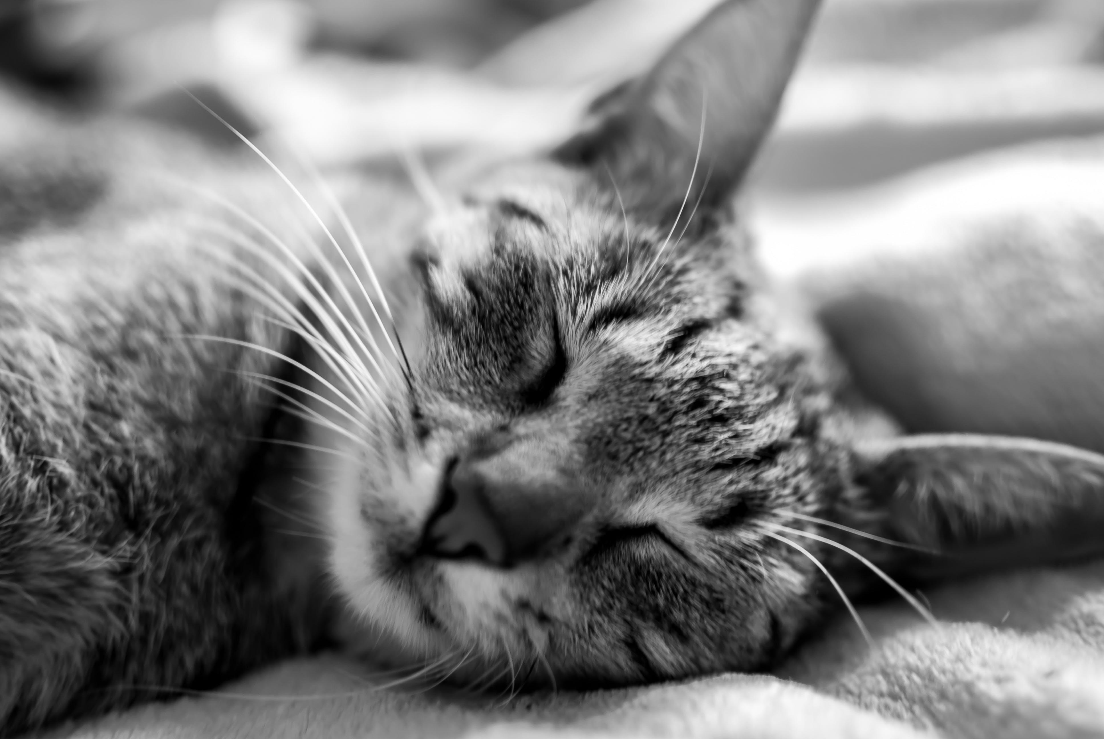 Cat in Close Up