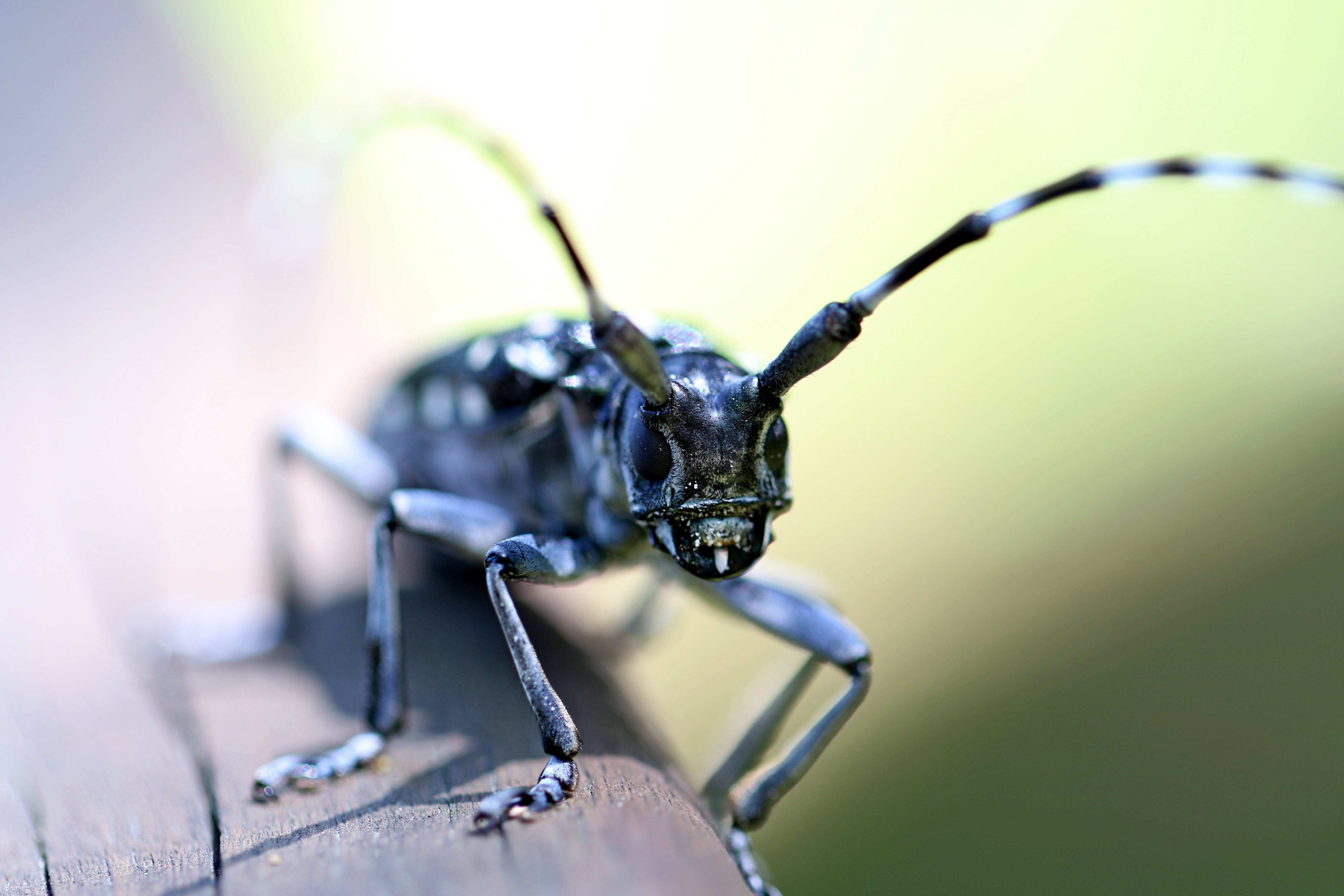 Shallow Focus Photo of Insect