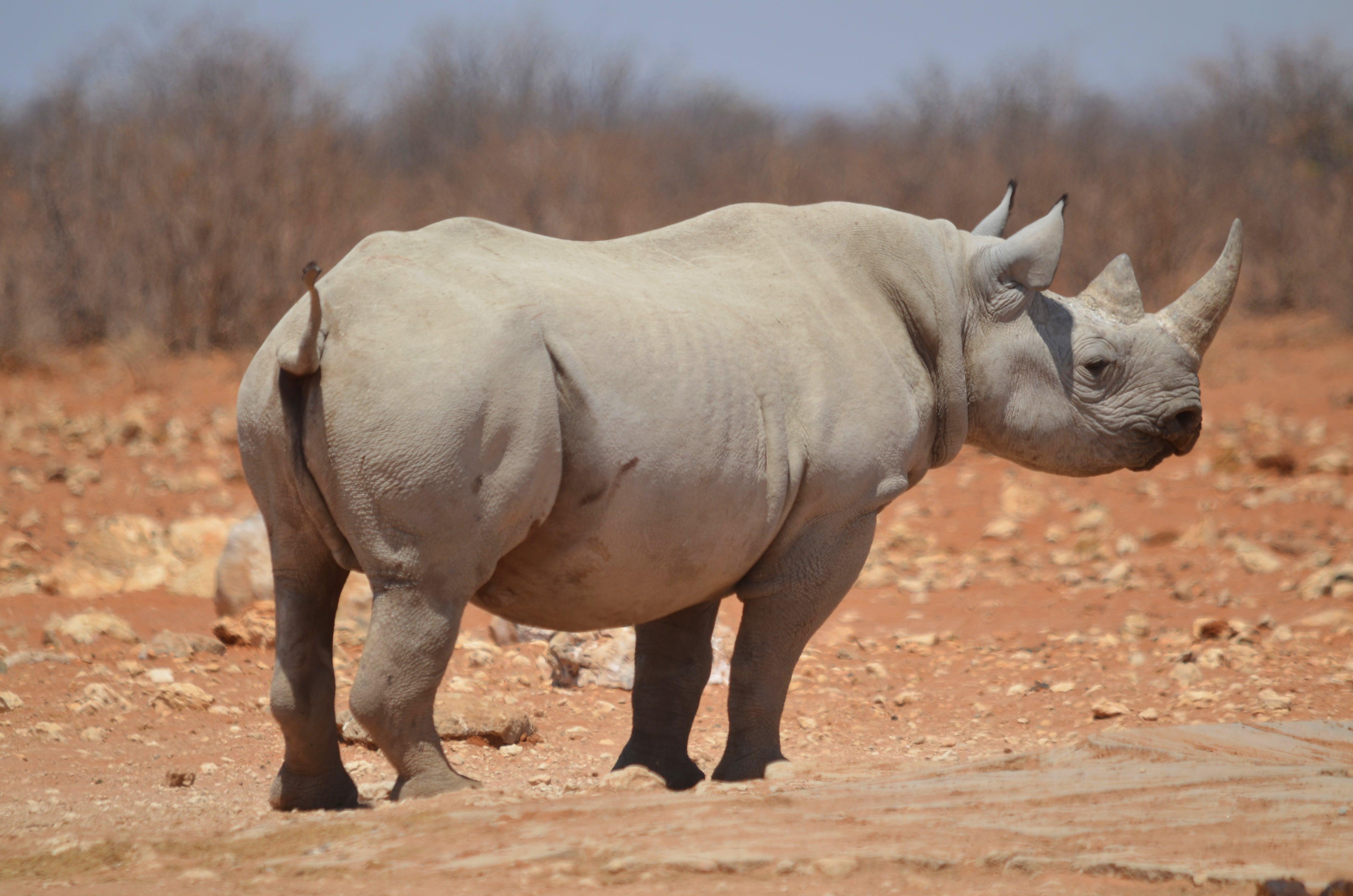 big five, etosha, etosha national park