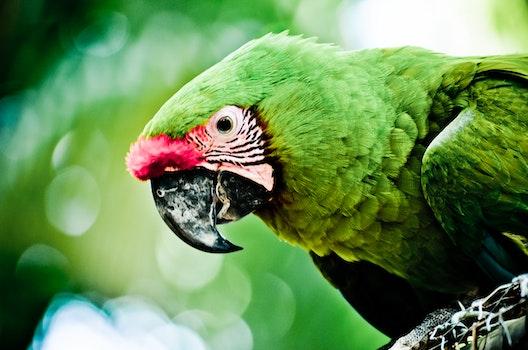Free stock photo of nature, bird, blur, bokeh