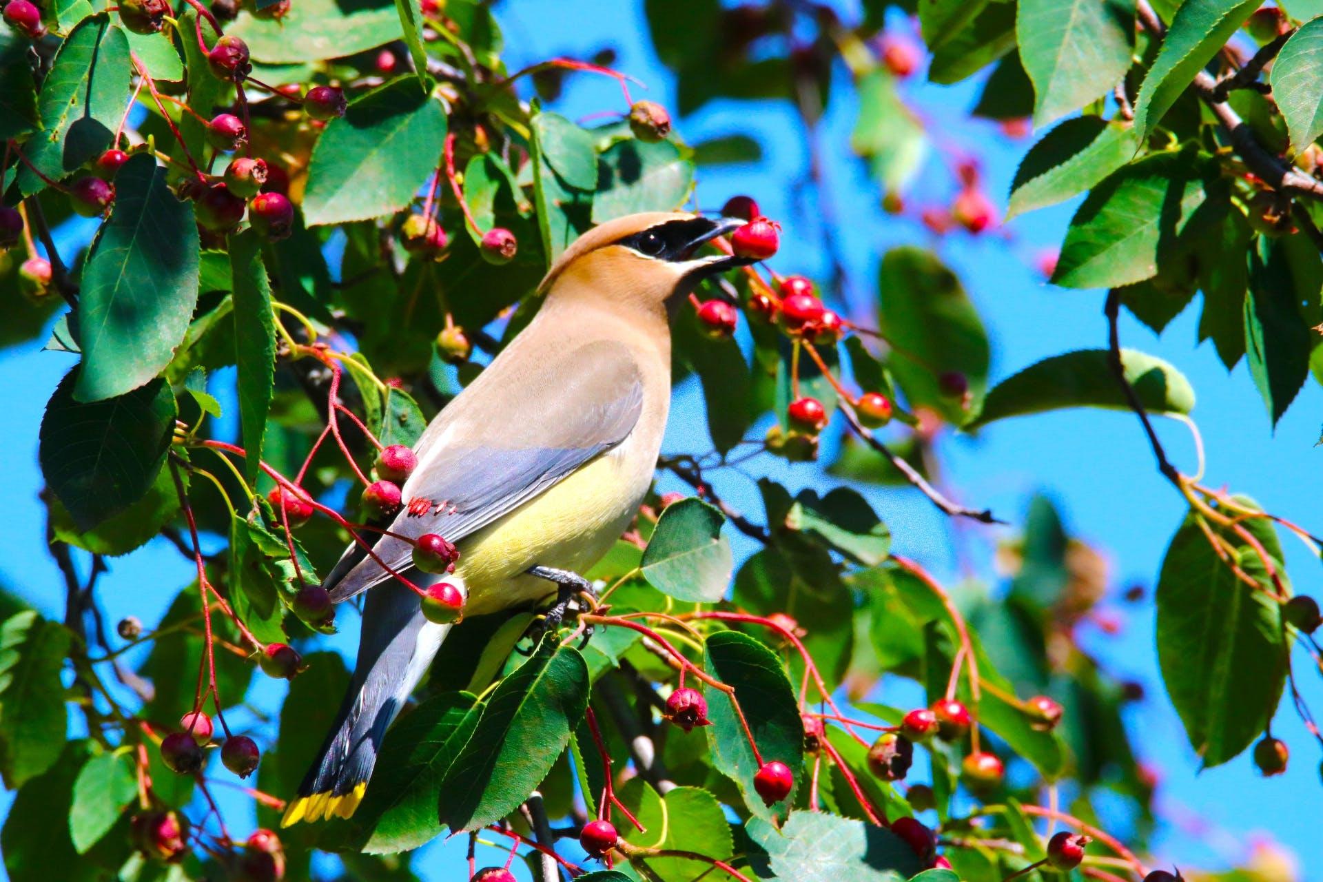 berry, bird, bloom