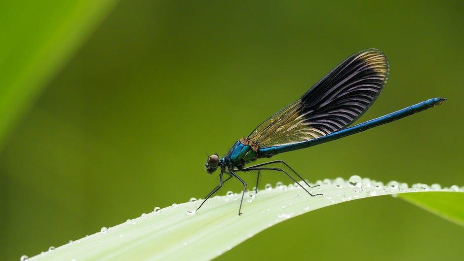 New free stock photo of blue, summer, garden