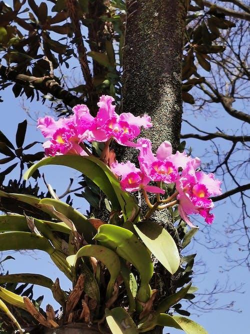 Free stock photo of árvore, flor, orquidea, planta