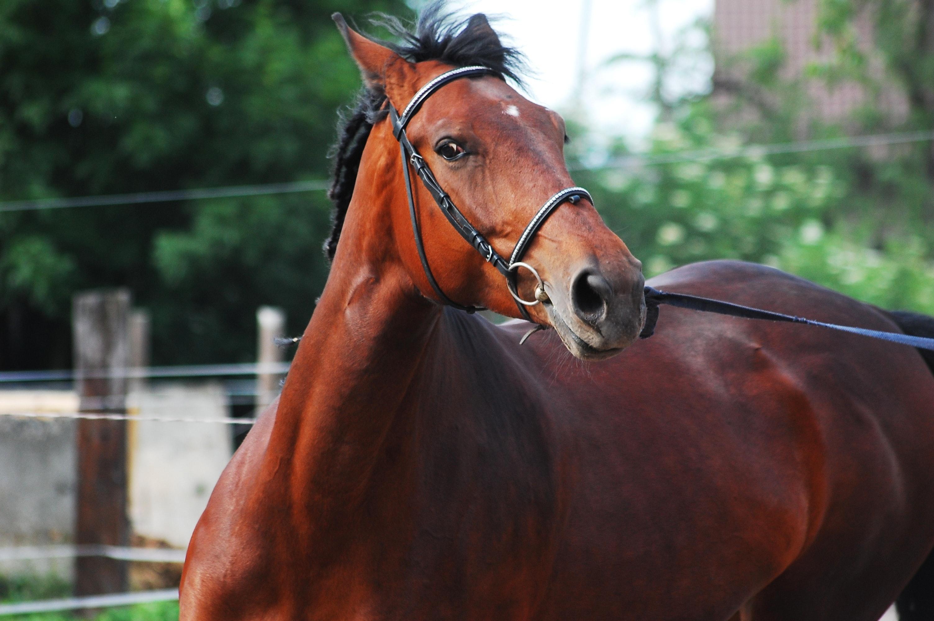 Horse Backriding Race 183 Free Stock Photo