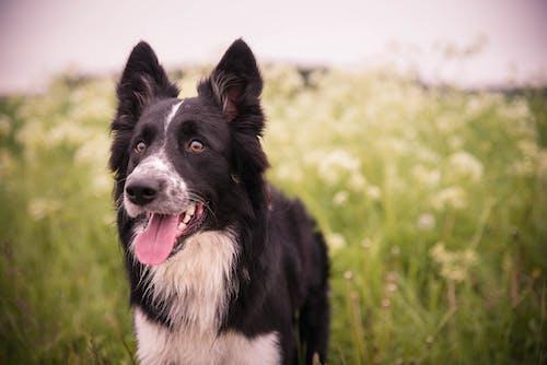 가정의, 강아지, 개, 개의의 무료 스톡 사진