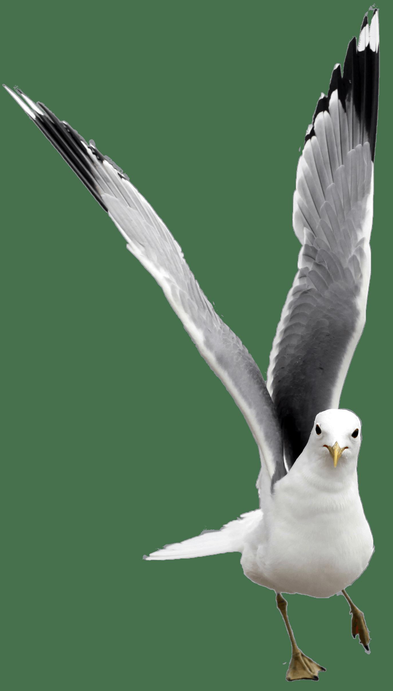 Free stock photo of animal, Baltic Sea, beach, birds