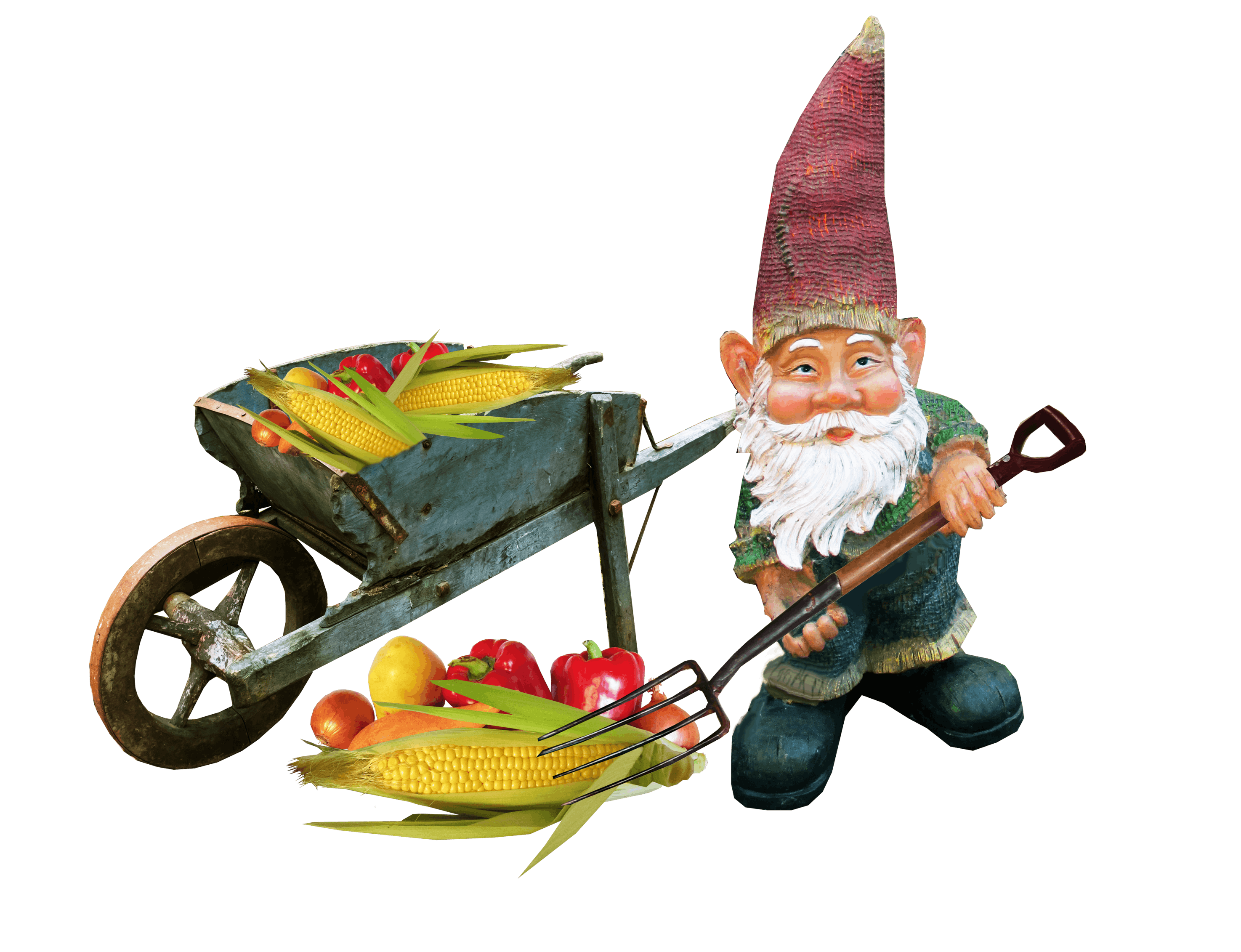 Free stock photo of vegetables, working, gnome