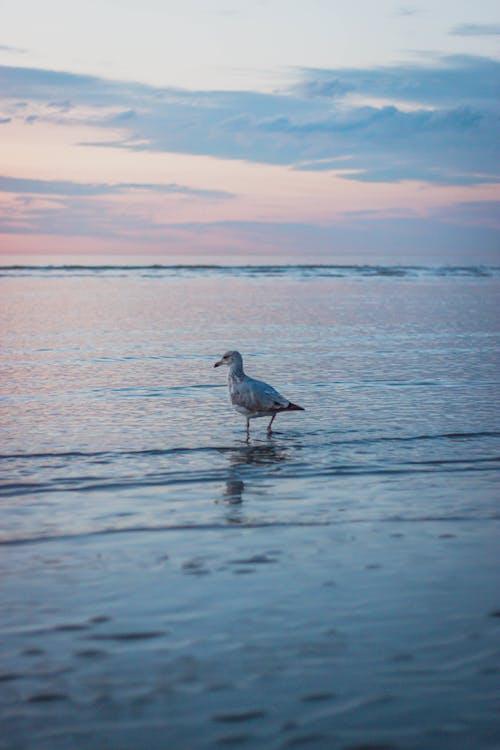 Lonely bird in ocean water