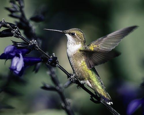 Small carnivorous bird with long spiky beak sitting on blooming flower stalk in garden