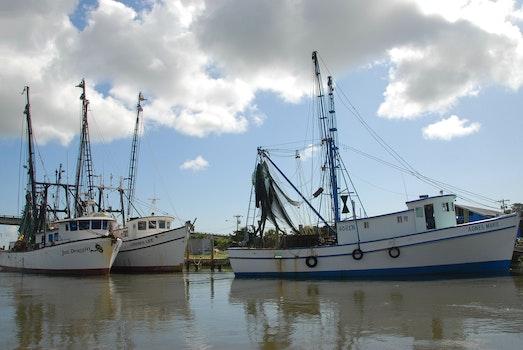 Free stock photo of food, fishing, sea, nature