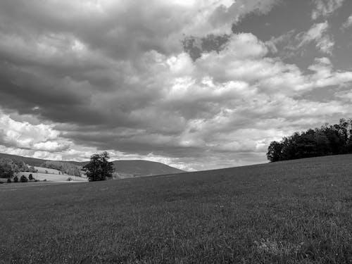 Fotos de stock gratuitas de árbol, blanco y negro, campo, fondo de la naturaleza