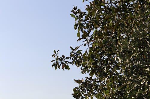 Green Leaves Under White Sky