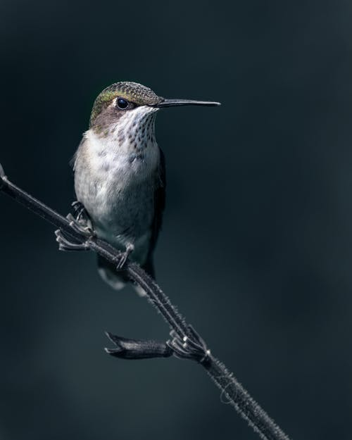 Small sized carnivorous bird with long pointed beak sitting on plant stalk in daylight