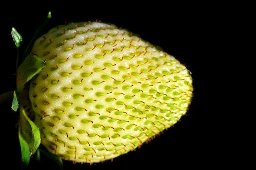 Free stock photo of blur, seeds, macro, fruit
