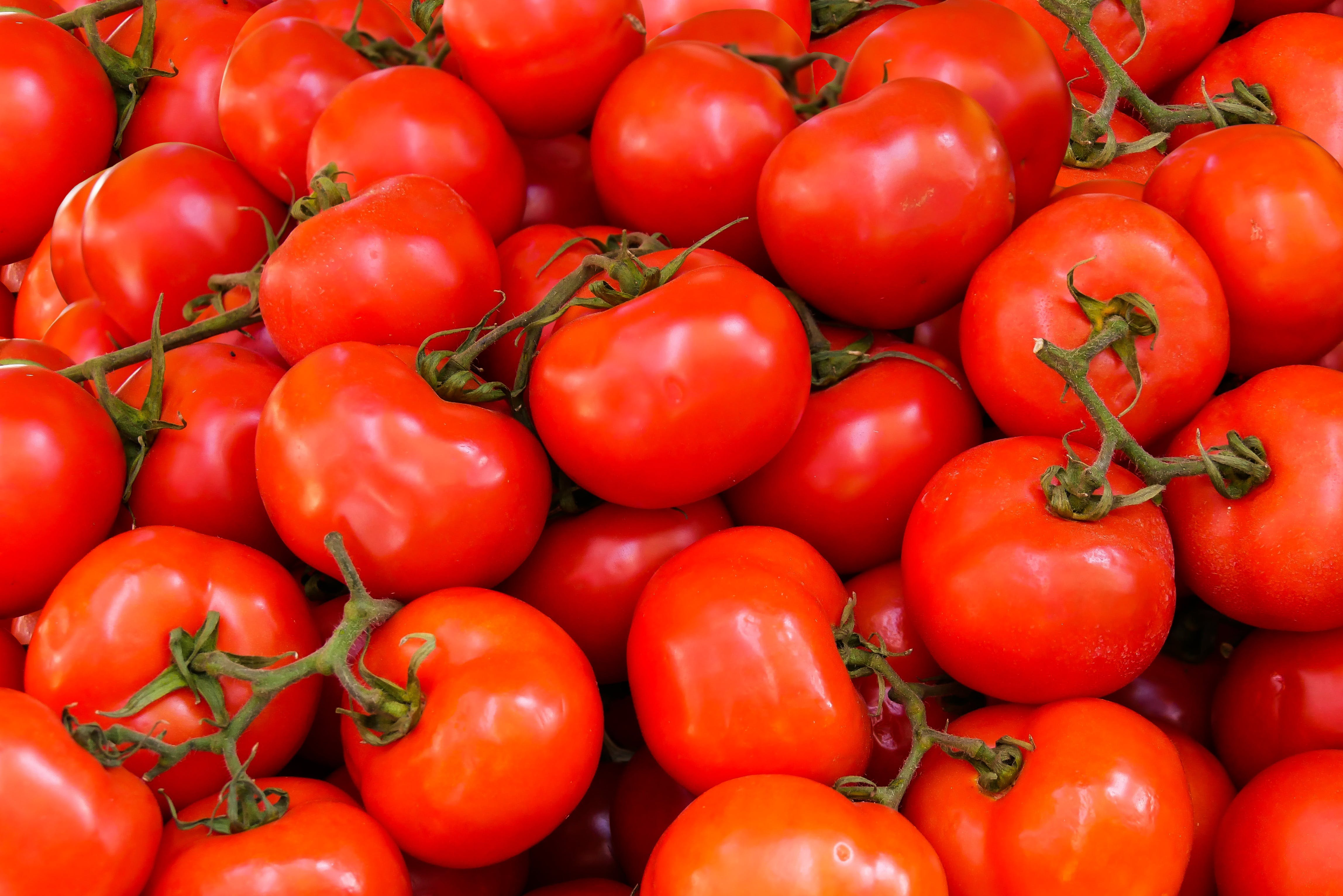 Free stock photo of healthy, tomatoes, agriculture, fresh