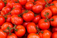 healthy, tomatoes, agriculture