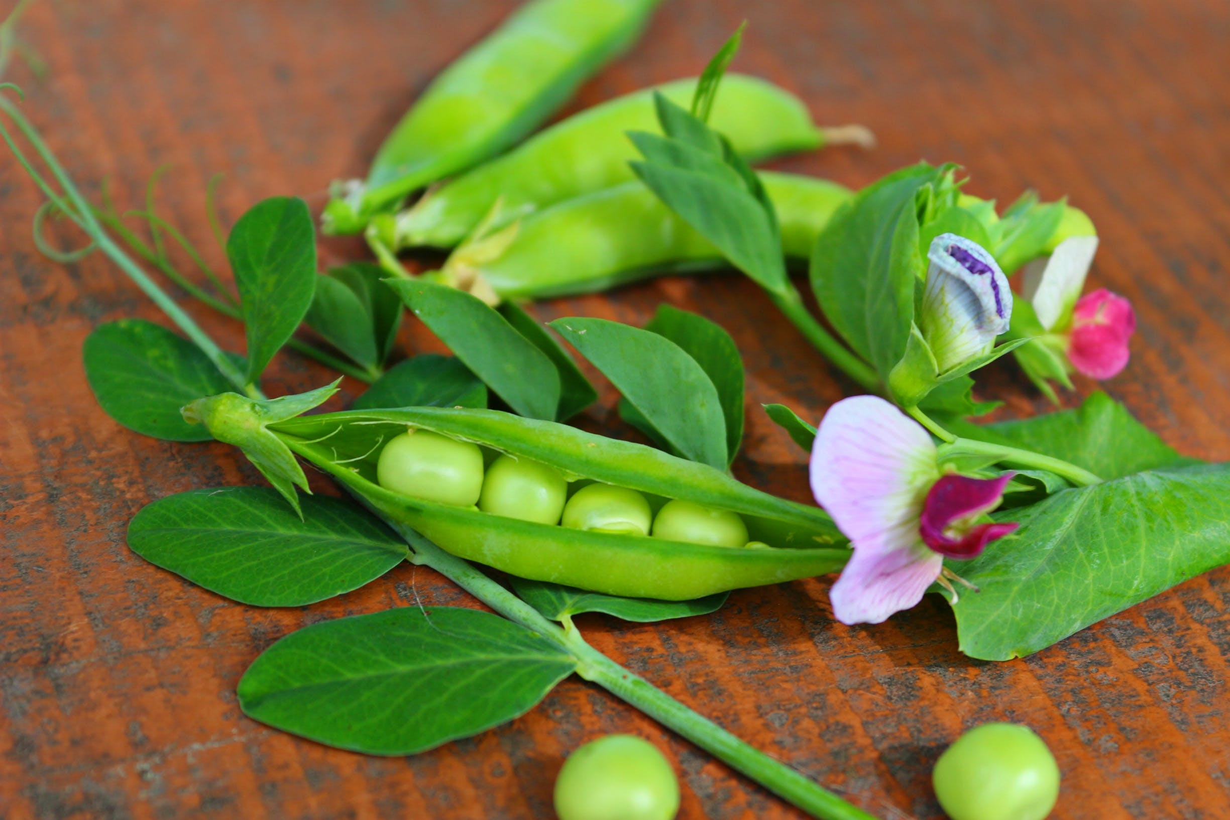 Free stock photo of vegetables, flowers, green, peas