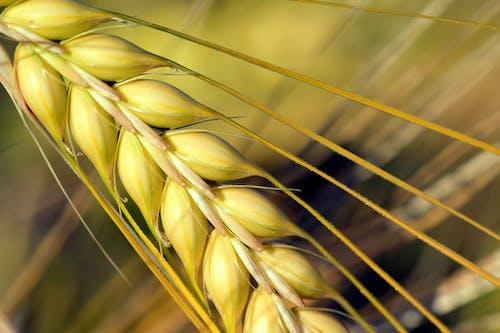Gratis lagerfoto af afgrøde, bane, bygmark, close-up