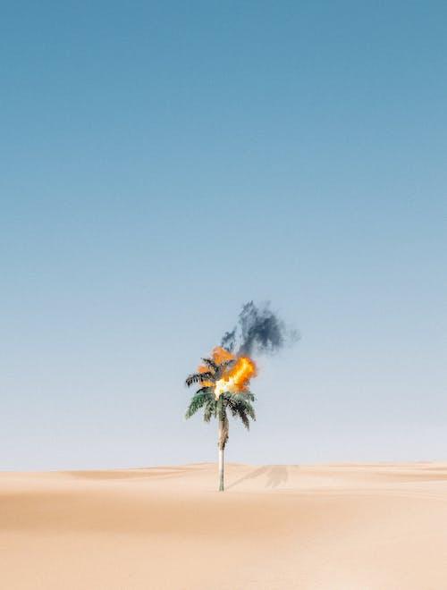 Darmowe zdjęcie z galerii z abstrakcyjny, árvore em chamas, błękitne niebo, czarny dym