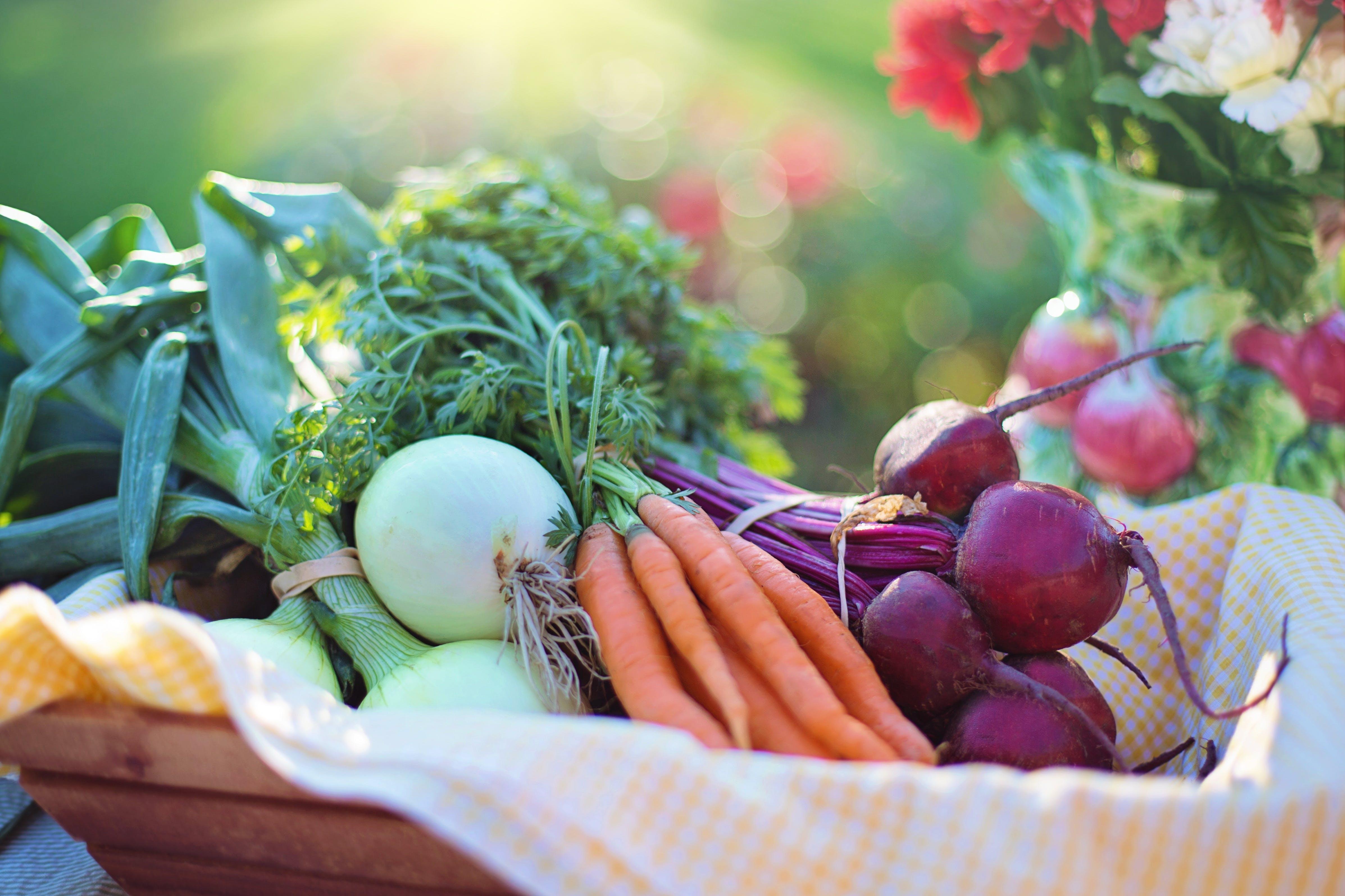 Foto profissional grátis de agricultura, alimento, aumentar, beterraba