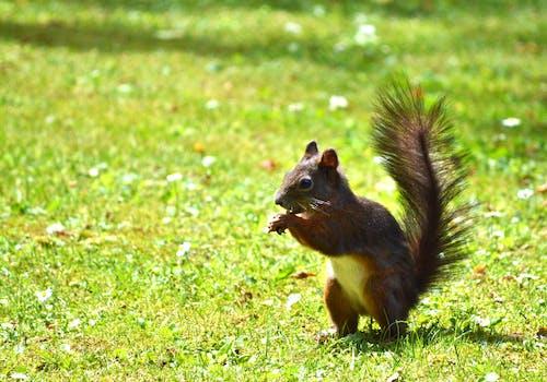 側面圖, 公園, 動物, 可愛 的 免费素材照片