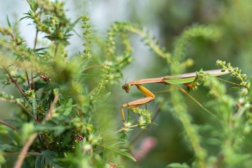 Predatory green mantis in lush vegetation