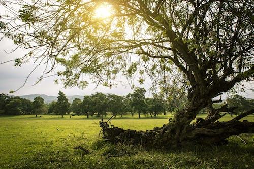Kostnadsfri bild av bakgrundsbelysning, bondgård, dagsljus, fält
