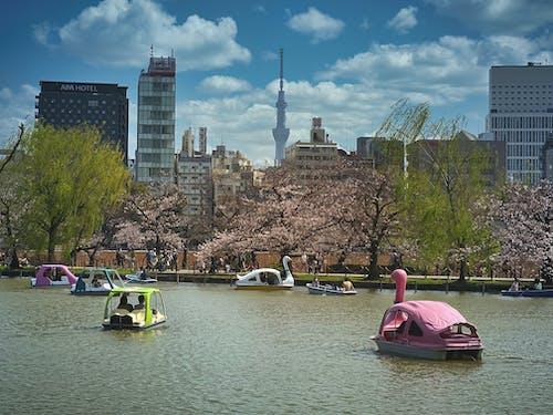 Foto d'estoc gratuïta de aigua, Àsia, barcos de aluguel