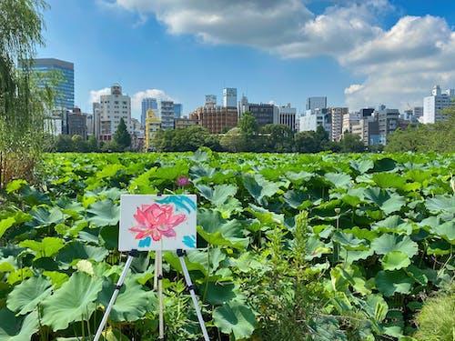 Foto d'estoc gratuïta de 'lotus indi', afició, art
