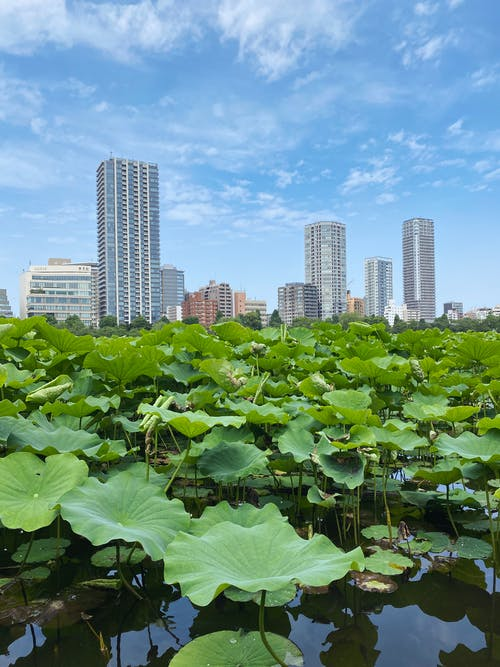 Free stock photo of apartments, aquatic plants, blue sky