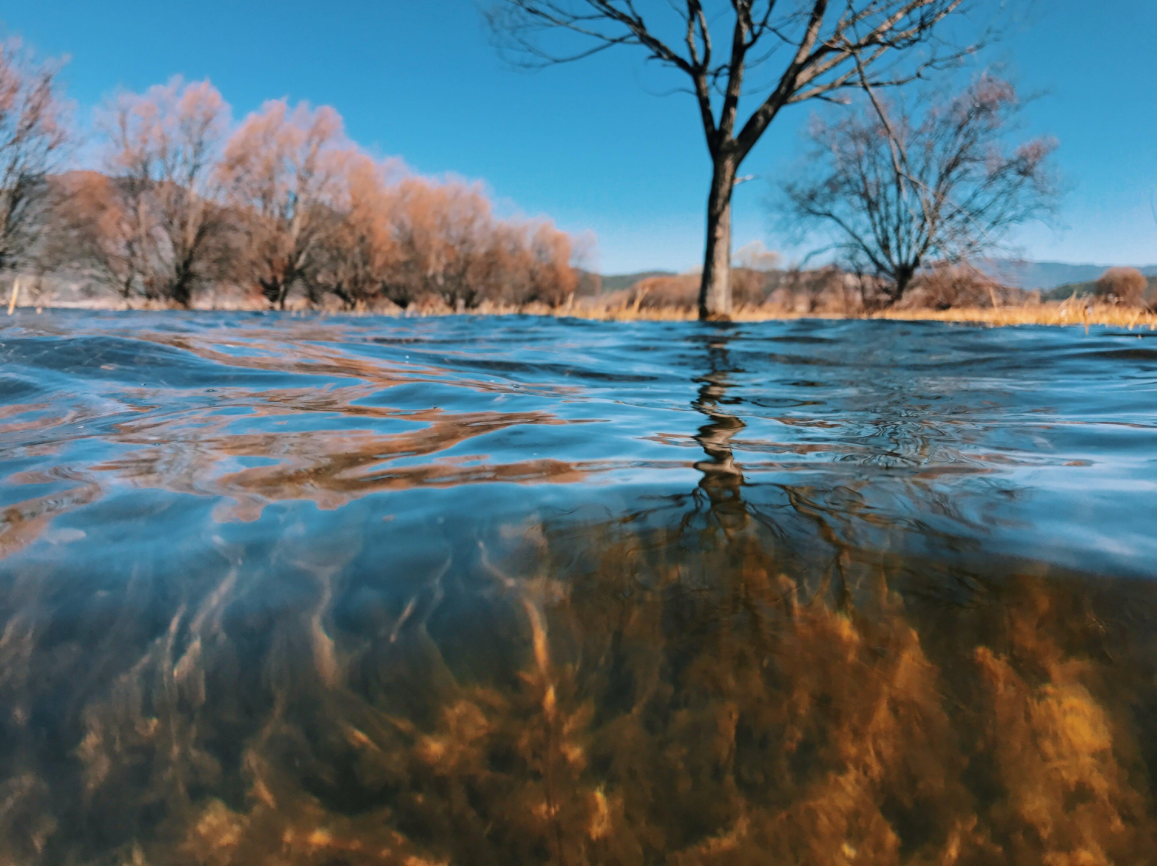 Kostenloses Stock Foto zu bäume, das wasser, die landschaft, handyfotografie