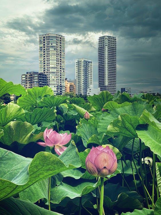 Kostnadsfri bild av anläggning, blå himmel, byggnader
