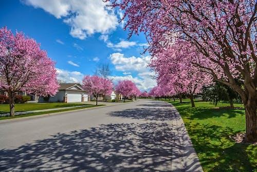 Foto profissional grátis de alojamento, árvores, bairro, brilhante