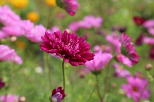 Foto d'estoc gratuïta de flora, florir, flors, Fons de pantalla HD