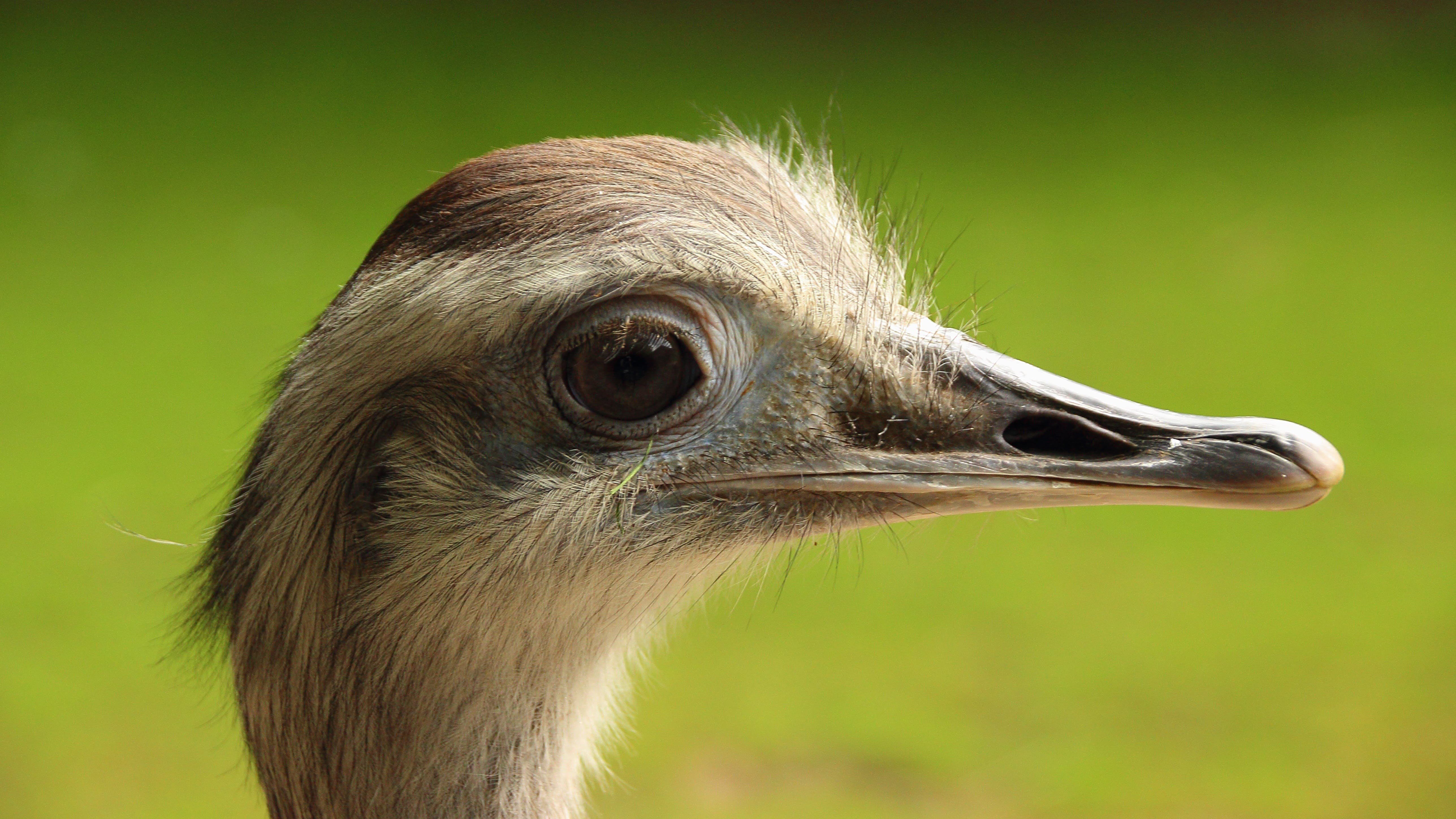 Close Up Photo Graphy of Ostrich Head