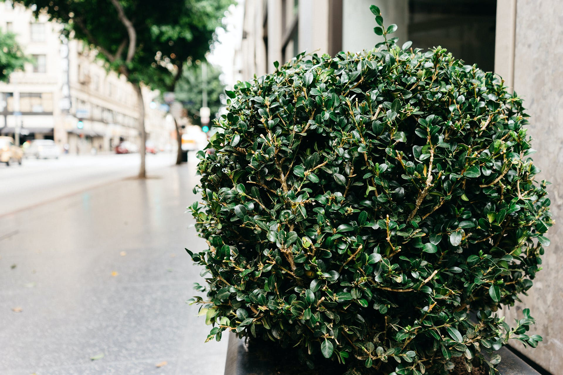 Green-leafed Outdoor Plant