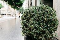 bush, shrub, sidewalk