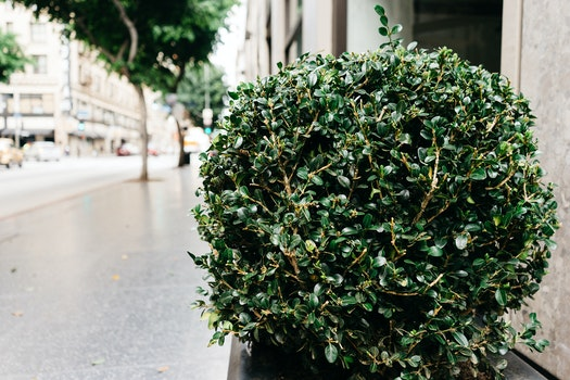 Free stock photo of bush, shrub, sidewalk