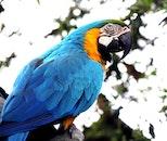 bird, animal, colorful