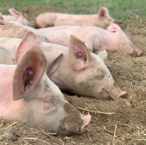 귀여운, 농업, 농장, 농촌의의 무료 스톡 사진