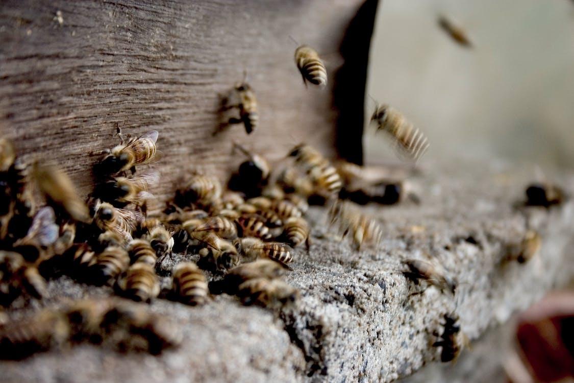 Rój Pszczół Robiących Miód W Ulu
