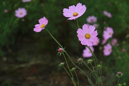 Blooming flowers growing in green garden
