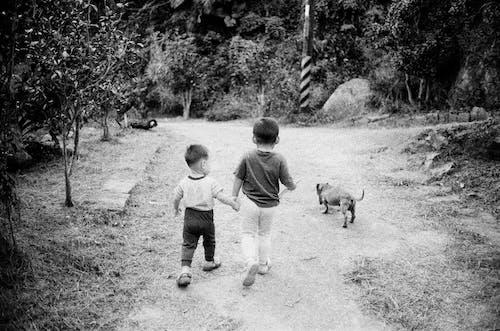 Cute little boys walking with dog
